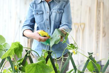organic garden bug spray